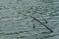 Het houten pool plakken uit water Stock Afbeeldingen