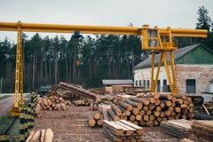 Het houten registreren, sorteren, vervoer en verwerking op zaagmolen stock afbeeldingen