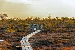 Het houten voetpad op het moeras met de herfst kleurde flora van Groot het moerasmoerasland van Kemeri in het nationale park van  royalty-vrije stock fotografie