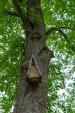 Het houten vogelhuis hangen op een boom stock fotografie