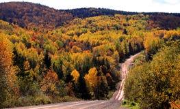 Het houtlandweg van de herfst stock fotografie