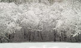 Het houtscène van de winter Stock Fotografie