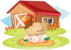 Het huis en de kip van het landbouwbedrijf Stock Foto