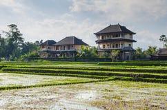 Het huis en de rijst Stock Fotografie