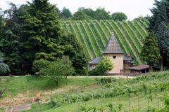 Het huis en de wijngaard Royalty-vrije Stock Afbeelding