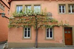 Het huis met tot bloei komende appelboom die dichtbij groeien stock afbeelding