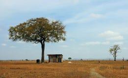 Het huis onder een boom Stock Fotografie