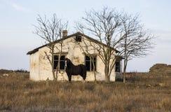 Het huis is op het gebied, paard Stock Afbeelding