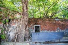 Het Huis van de Anpingsboom bij Anping-District, Taiwan op 20 September, 2018 Dit oude pakhuis wordt behandeld door vertakt van o stock fotografie