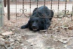 Het huis van de hondomheining Stock Foto's