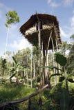 Het Huis van de Korowaiboom Stock Fotografie