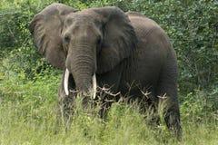 Het huis van de olifant stock afbeelding