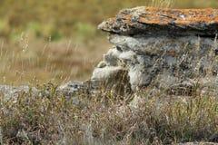Het huis van de rotsvorm aan pika in Rockyview-provincie Stock Fotografie