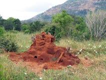 Het huis van de termiet Royalty-vrije Stock Afbeeldingen