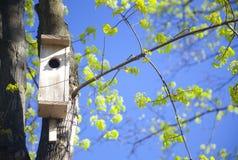 Het huis van de vogel en jonge de lentebladeren stock afbeeldingen
