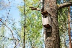 Het huis van de vogel op boom stock foto