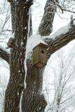 Het huis van de vogel op de boom in de winter Stock Afbeelding