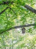 Het huis van de vogelboom het hangen op een boomtak Royalty-vrije Stock Foto