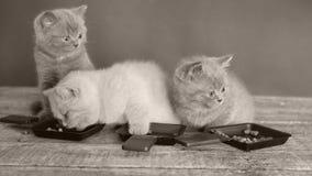 Het huis van het kattenkarton, gopro binnenmening stock video