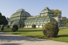 Het huis Wenen van de palm Stock Afbeeldingen