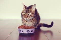 Het huisdier van de gestreepte katkat met groene gele ogen die op vloer zitten die droog voedsel eten royalty-vrije stock afbeelding