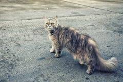 Het huisdier van de kattenpot Royalty-vrije Stock Foto