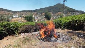 Het huisvuil brandt aan de kant van de weg stock videobeelden