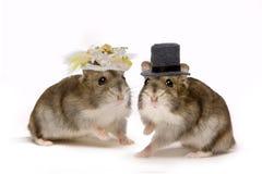 Het huwelijk van de hamster Stock Foto's