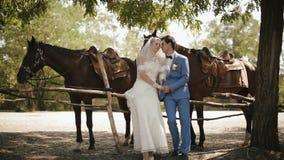 Het huwelijksportret van gemiddelde lengte van de mooie gevoelige paarholding handen en het wrijven van neuzen dichtbij de paarde stock video