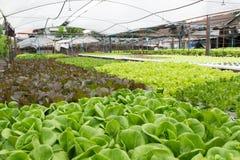 Het Hydroponic groenten groeien in serre Stock Afbeeldingen