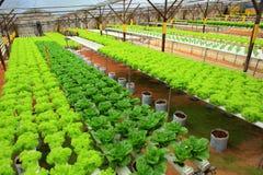 Hydroponic landbouwbedrijf Stock Afbeelding