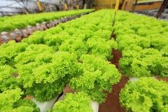 Hydroponic landbouwbedrijf Royalty-vrije Stock Foto's