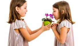 Het identieke tweelingmeisje ruikt bloem - gift van zuster stock foto's
