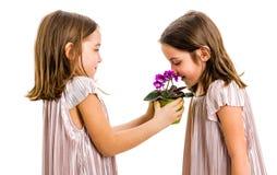 Het identieke tweelingmeisje ruikt bloem - gift van zuster royalty-vrije stock afbeeldingen
