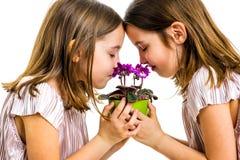 Het identieke tweelingmeisje ruikt de groene pot van de altvioolbloem stock afbeelding