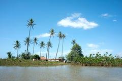 Het idyllische landschap van Brazilië met Kokospalmen - Parnaiba-Rivier stock foto
