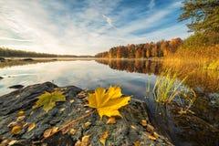 Het idyllische landschap van het de herfstmeer met esdoornblad op de rots Royalty-vrije Stock Foto's