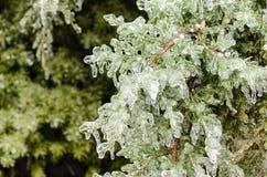 Het ijs behandelde altijdgroene boom stock fotografie
