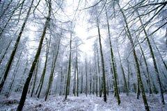 Het ijs behandelde bebost bos. royalty-vrije stock foto's
