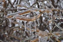 Het ijs behandelde naakte takken Stock Foto's