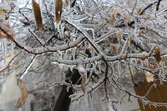 Het ijs heeft de bomen overheerst royalty-vrije stock fotografie