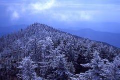 Het Ijs van de rijp op Mt. Mitchell Royalty-vrije Stock Foto's