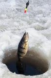 Het ijs van de toppositie visserij royalty-vrije stock foto's