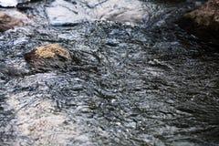 Het ijswater van de de lentekreek Stock Fotografie