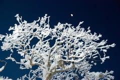 Het ijzige bos van de winter Stock Afbeelding