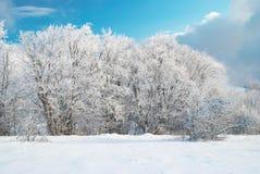 Het ijzige bos van de winter Stock Afbeeldingen
