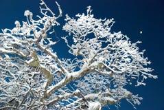 Het ijzige bos van de winter Stock Foto
