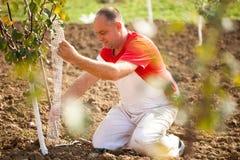 Het industriële landbouwthema, landbouwer beschermt bomen met gebreid Royalty-vrije Stock Afbeeldingen