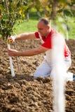 Het industriële landbouwthema, landbouwer beschermt bomen met gebreid Royalty-vrije Stock Foto