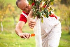 Het industriële landbouwthema, landbouwer beschermt bomen met gebreid Stock Afbeelding